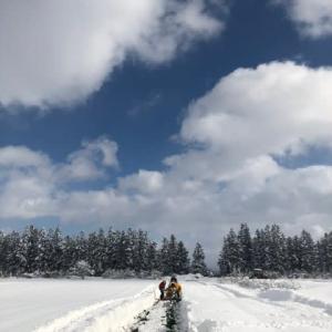 馬場農園雪下にんじん『灯かり(ひかり)』