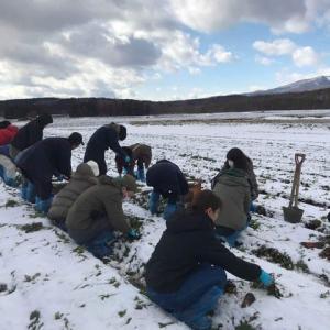 令和初(^ω^)雪下にんじん収穫体験