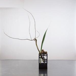 石化柳の面白い枝と栗