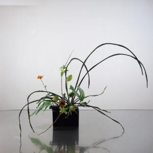 シースルー感、一本ずつの花材の線を見せる