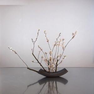 桜、一種生け