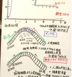病原性ウイルスと常在ウイルスの鑑別点 そればウイルス数/大橋眞氏 徳島大学