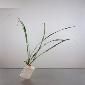 タカノハススキを、不安定な花器に