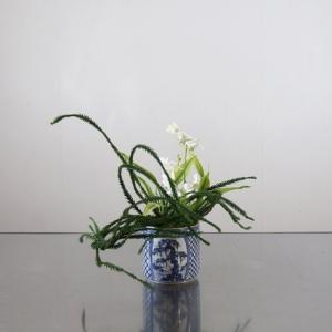 エンコスギを絡めて、白い花と合わす