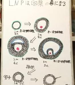新型劇薬LNPは卵巣の毒2/大橋眞氏 免疫生物学
