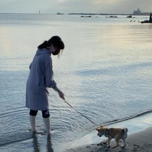 柴犬『ひのき』砂浜で思いっきり掘ってごらん!