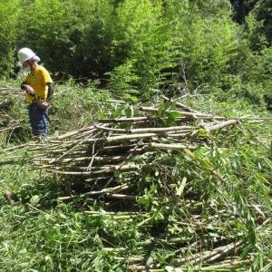サマータイム導入の里山ボランティアで竹林整備