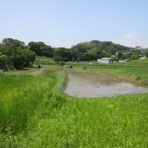田植え体験会の「泥遊び」の様子が動画で!