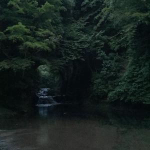 濃溝の滝でホタル