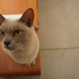 隠れ家発見。癒しの猫ギャラリー。