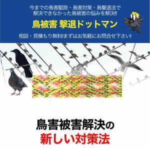 2393)鳥害被害対策(鳩、カラス)