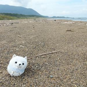 お久しぶりのビーチコーミング 初めてのルリガイをゲット(≧∀≦)