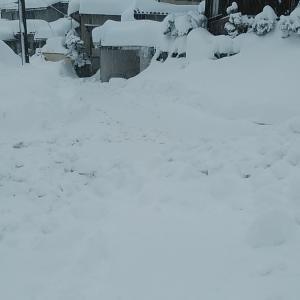 大雪もこちらは一段落つきました