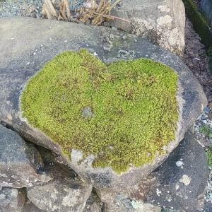 恋愛のパワースポット 明智神社を再訪 ハート苔