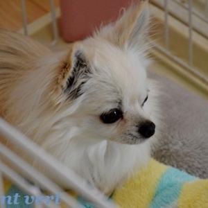 http://dandelion121217.blog.fc2.com/blog-entry-2514.html