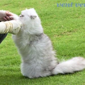 お外でね 楽しむ(?)猫さんふたりです