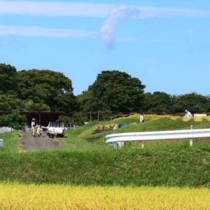 シルバーウィーク 稲刈り真っ最中のわんにゃん地方です