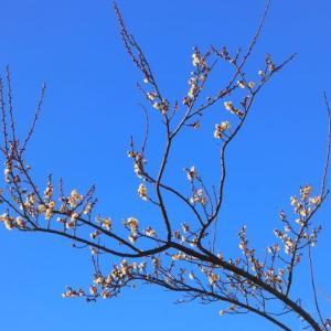 寒くても自然界は間違いなく 春に向かっているようです