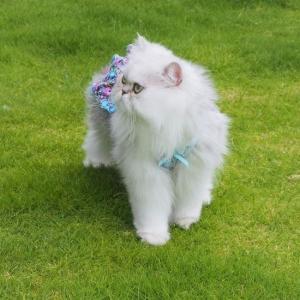 新しいお洋服を着て 芝生で楽しく遊ぶすみたまちゃんでした