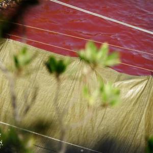 イルカ追い込み漁「動物愛護法違反」美貫団体「LIA」が提訴!売国奴・二階幹事長の「伝統詐欺」に騙されるな!