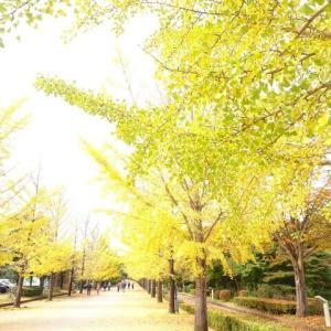 孫のあっくんとミューズパークでお散歩♪(*^-^*)♪
