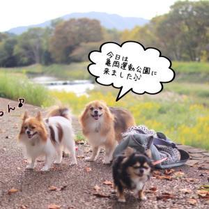 亀岡運動公園✩°。⋆⸜(*˙꒳˙*  )⸝