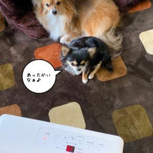 ママ♡Happybirthday(*´╰╯`๓)♬