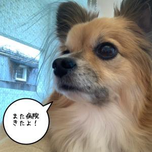 サスケくん通院の日( * ˙˙ )*