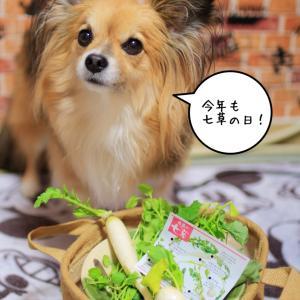 無病息災☆七草粥の日╰( U ・ᴥ・)m