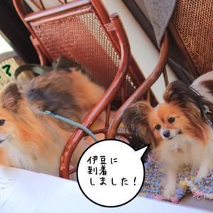 お友達と伊豆旅行♡1日目✩.*˚Part❶【マカロニ市場→六仙の里♡】