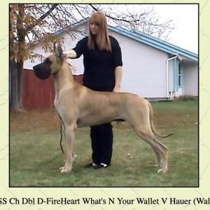Wallyの作出犬