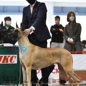 ジャパンインターナショナルドッグショー