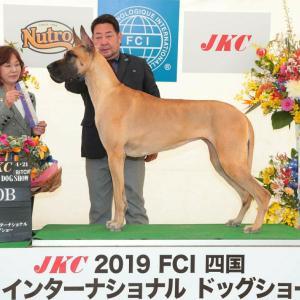 FCI四国インターナショナルドッグショー&徳島クラブ連合会展