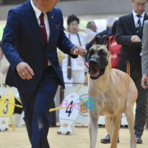 ②近畿インターナショナルドッグショー