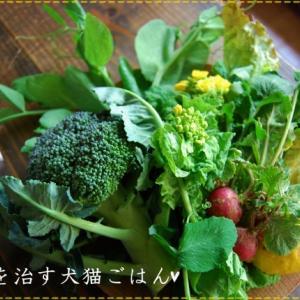 病気を治す犬猫ごはん〜お肉レシピ ささみ〜
