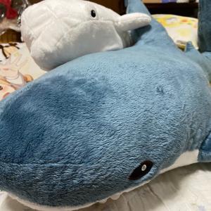 サメがやってきた