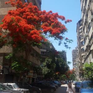 外へ出ると。。。カイロの街の様子