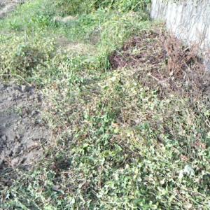 ⑤区画の耕起~畝つくり