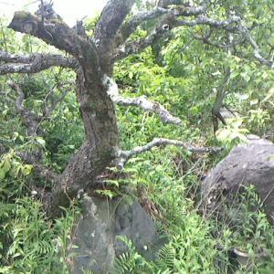 管理出来ない庭木を伐採