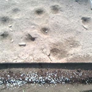波板畝完成から斜面の播種
