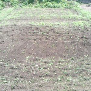 さつまいもの圃場を耕起