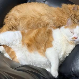 ラブラブ猫一家