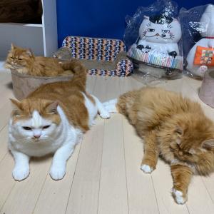 カメラに集まる猫一家