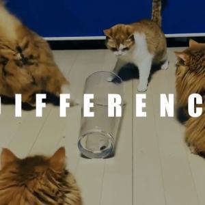 猫が花瓶にスッポリ!
