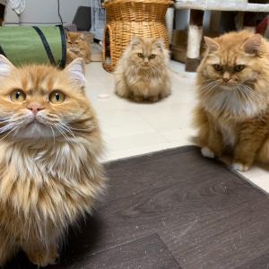 猫たちが集まる原因は?
