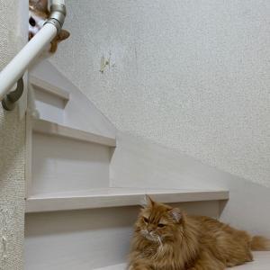 家ネコは見た