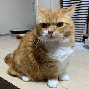ウ○コしちゃった猫