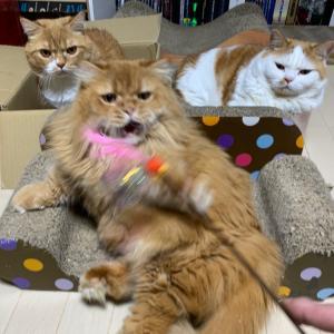 夜中のオス猫たち