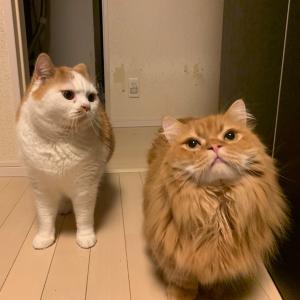 羨ましがる猫