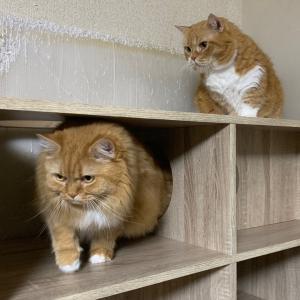 届かない猫パンチ